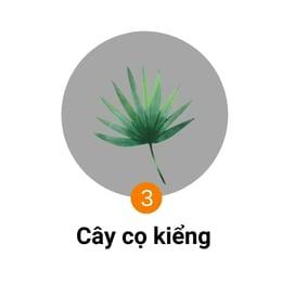 cây cọ kiểng