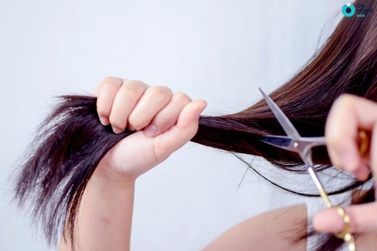 không cắt tóc